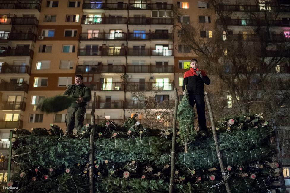 A kispesti piacon reggel fél hatkor indul a piacfoglalás. A helypénz 200 ezer forint, ami december 24-ig szól. December 9-én érkezik a szállítmány, a régi jó ismerős árusok segítségével két óra alatt lerakják a körülbelül 250 darab fát.