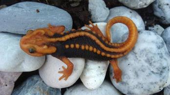 163 új fajt fedeztek fel a Mekong folyónál