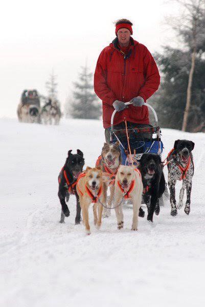 220 km-es kutyaszánhajtó versenyen Csehországban.