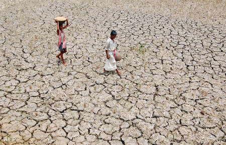 2009-es aszály Indiában (Fotó: Parthajit Datta)
