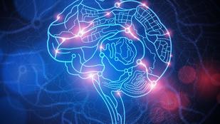 Nem az agyban, hanem a hasban kezdődik a Parkinson-kór