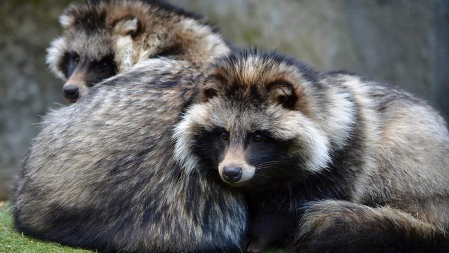 Január első szombatján ragadozó napot tart a Budakeszi Vadaspark