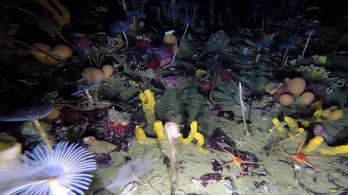 Lenyűgöző élővilágot találtak az Antarktisz jege alatt