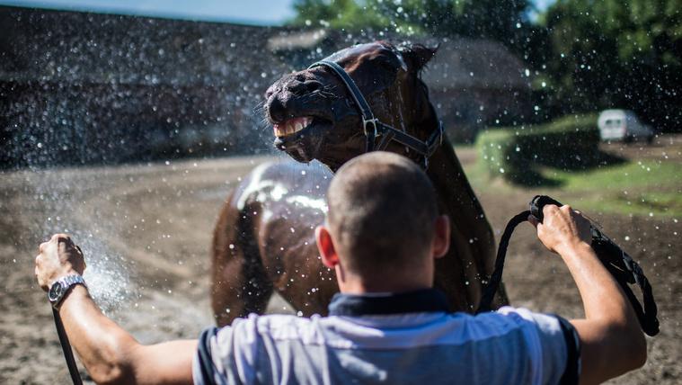 Csodaló nélkül a büszkeség tartja életben a magyar lóversenyt