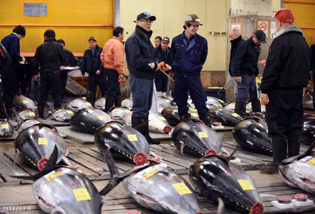 Fagyasztott halakat néznek érdeklődők a tokiói Cukidzsi nagybani halpiac ez évi első tonhalárverésén