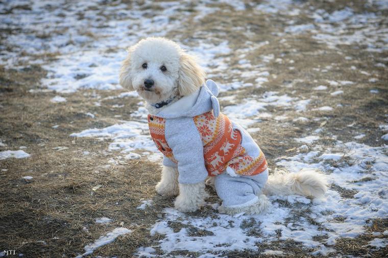 Na jó, lehet akármilyen szép a tél, azért valljuk be fel kell öltözni ebben a kutya hidegben