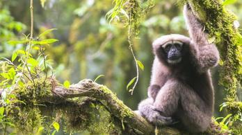 Skywalkernek neveztek el egy új majomfajt