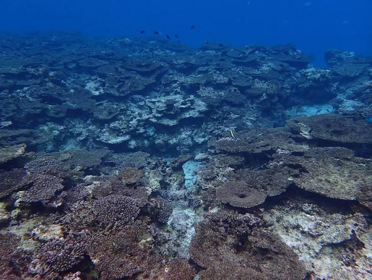 Halott korallok Okinawa mellett