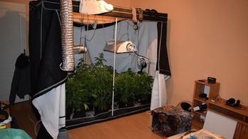 Kender meglepetés: a lakásában termesztett füvet