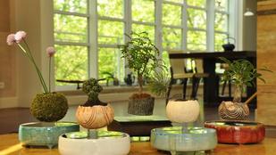 Lebegő bonsai az igazi növényrajongóknak!