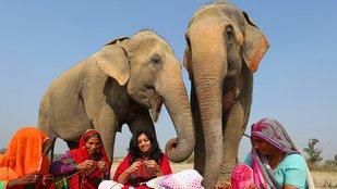 Pulóvereket kötnek a didergő elefántoknak Indiában