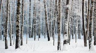 Ne csak gyönyörködjön a hóban, örökítse is meg!