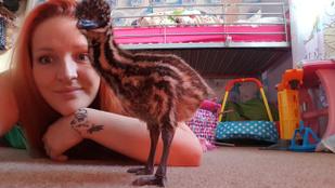 Vett egy tojást az eBayen, most van egy saját emuja