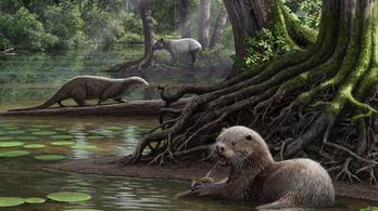 Farkasméretű ősvidra élt Kínában
