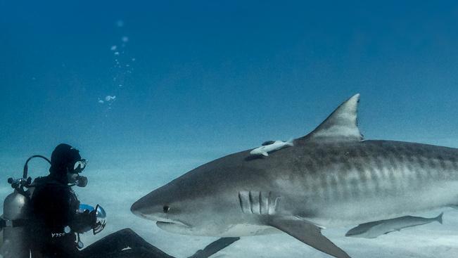 Hova ne utazzunk, ha kerülnénk a cápákat?