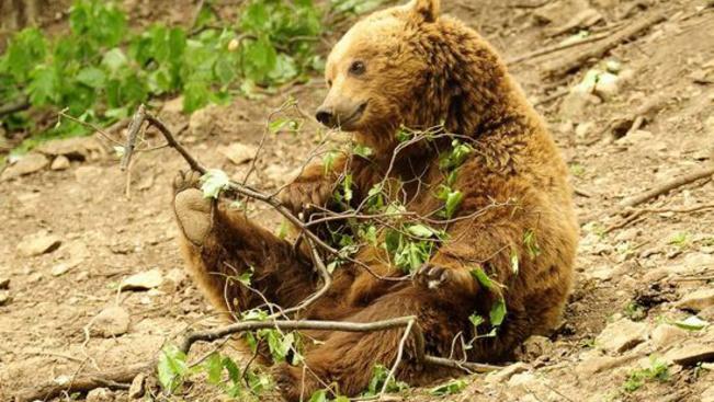 Medveles napokat tart a Budakeszi Vadaspark