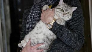 Boszorkánynak adta el macskáját, mert szerinte szuperképessége volt