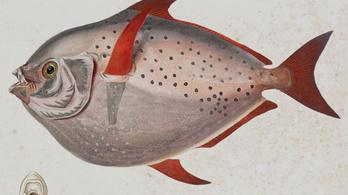 Egy, csak egy hal van, amelyik nem hideg vérű