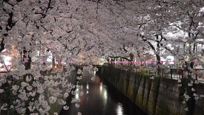 Itt a tavasz! Márciusban kezdődik a cseresznyevirágzás Japánban