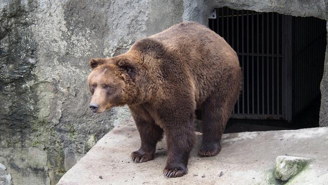 Nincs ma árnyéka a medvének! Hamar vége lesz a télnek?