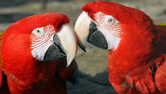 Szombattól a szerelmespárok egy jeggyel mehetnek a fővárosi állatkertbe