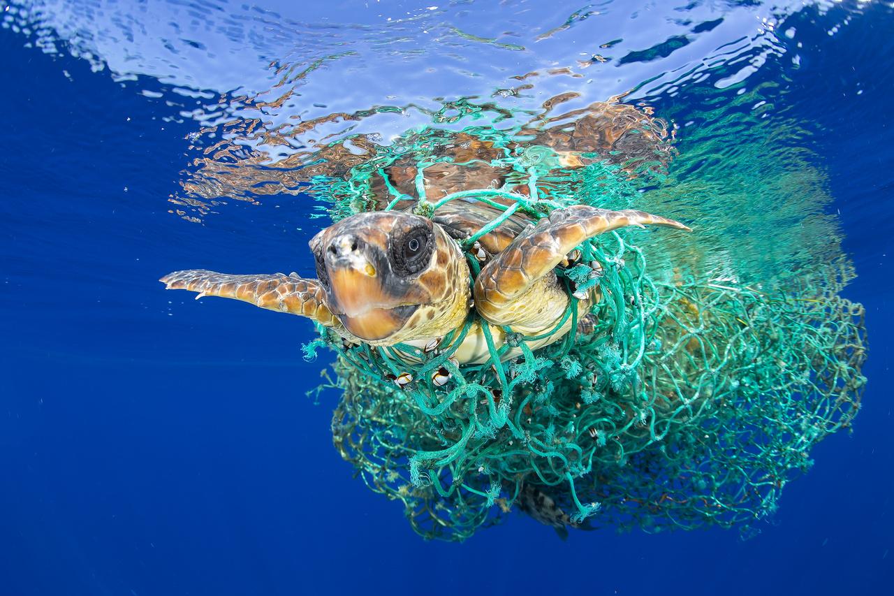 Természet (egyedi) I. helyHalászhálóba tekeredett teknős Tenerife partjainál.