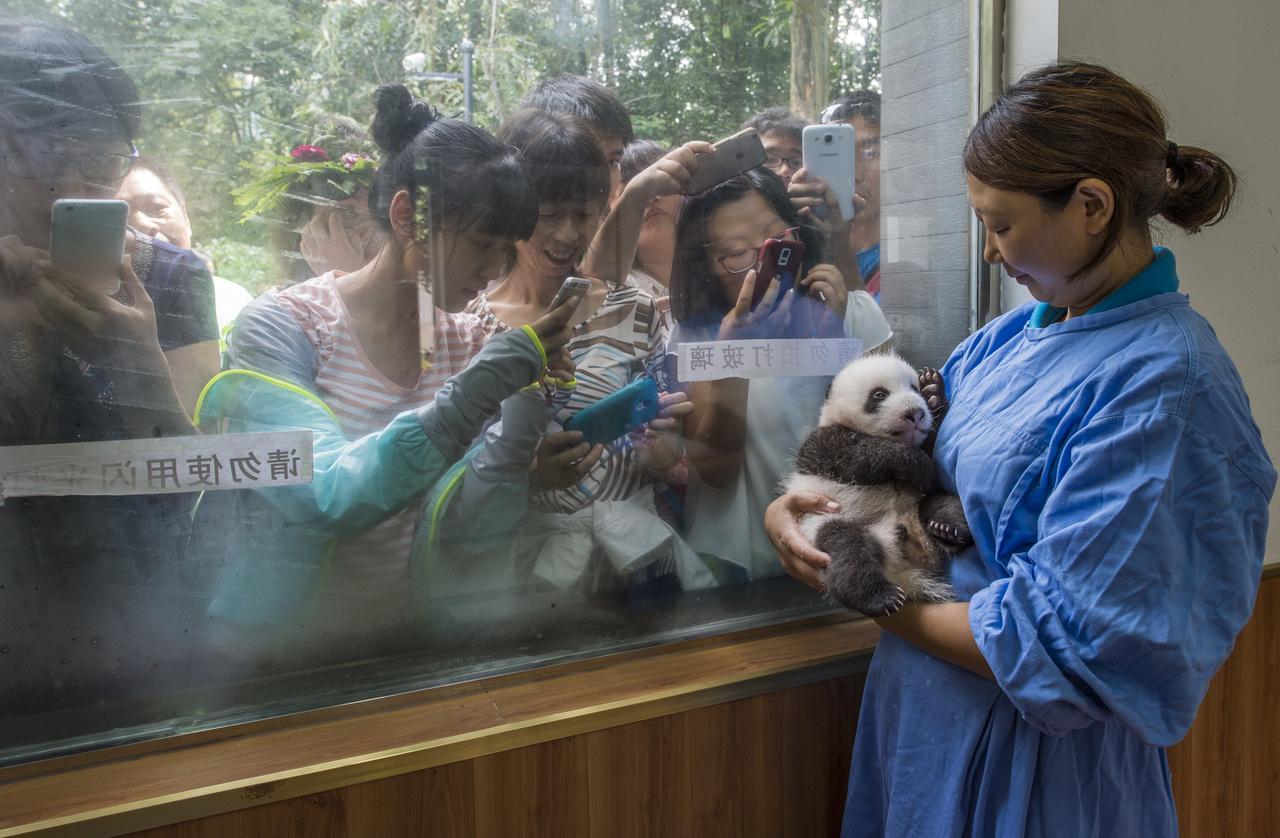 Természet (sorozat) II. helyEgy gondozó mutatja be az állatpark legújabb pandakölykét a látogatóknak. Az óriás panda tavaly lekerült a veszélyeztetett állatok listájáról, de csak azért, mert a populáció rohamos fogyását mesterséges körülmények között sikerült megfékezni Kínában.