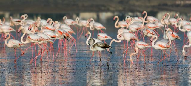 Flamingók a larnakai tavon