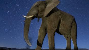 Az elefánt széttaposta a vakut, de ötvenezer képből meglett az oroszlán