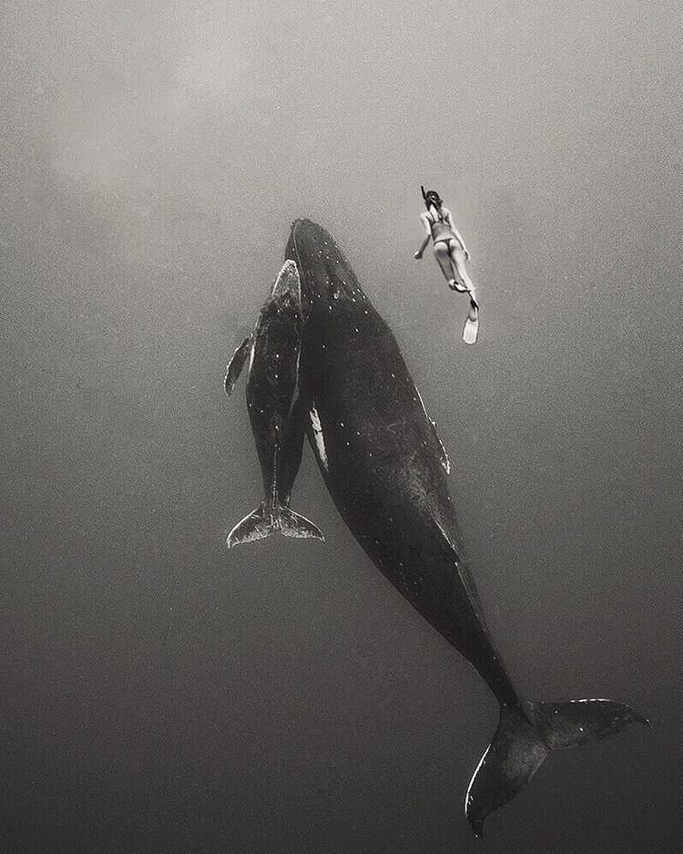 A cápáknál már csak a bálnák társaságát kedveli jobban.