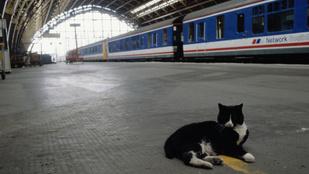 Maratoni utat tett meg egy macska Európában