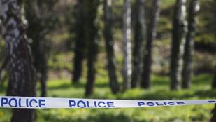 Agancsgyűjtés közben tűnt el három fiú egy mórágyi erdőben