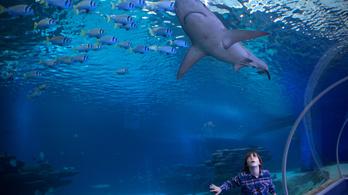 Cápákkal is lehet poszttraumás stresszt gyógyítani