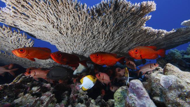 Hawaii a korallzátonyokat védené a kémiai fényvédők betiltásával