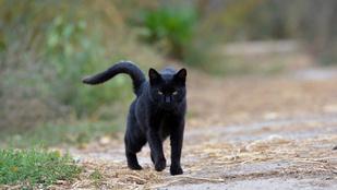 Egy fekete macska döntötte el, milyen estéje lesz 3 ezer balmazújvárosinak