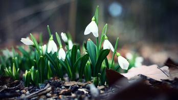 Bekacsint a tavasz egy pár napra