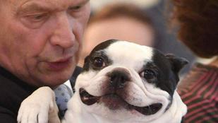 A finn elnök kutyájánál kevés jobb arc létezik