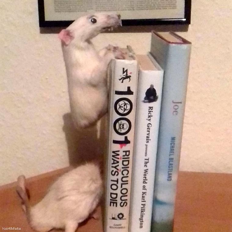 Való igaz, hogy elég bizarr kreatúrák születtek - ez itt például egy könyvtámasz két egykori egérből