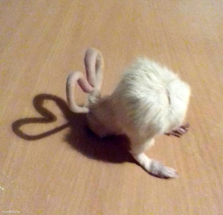 Kezdetben egerek és patkányok tetemeivel kísérletezett, de most már áttért mókusokra és vakondokra is
