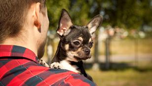 A kutyák tudják, ki a rossz arc