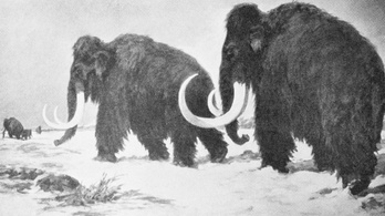 Szomorú véget értek a gyapjas mamutok