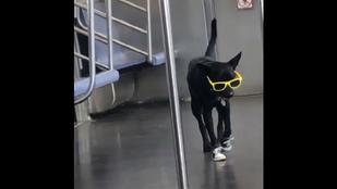 A lazaság új mértékegysége ez a metrózó kutya