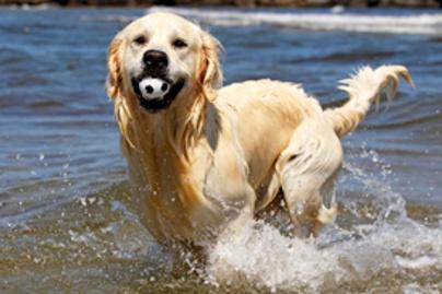 kutya lead1