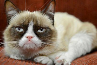 grumpy cat lead