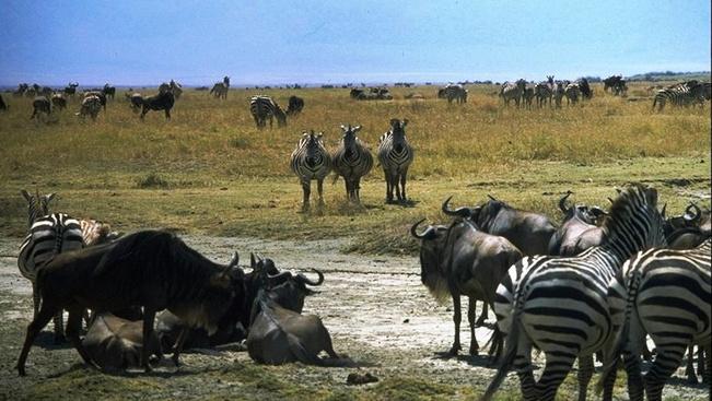 Híres régésztáborhelyet nyitnak meg a turisták előtt Tanzániában