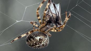25 millió tonnányi pók él a Földön