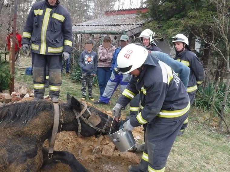 Az ijedtség ellenére nem esett komoly baja.Gratulálunk az életmentő tűzoltóknakBízunk benne, hogy az állat mihamarabb teljesen felépül.