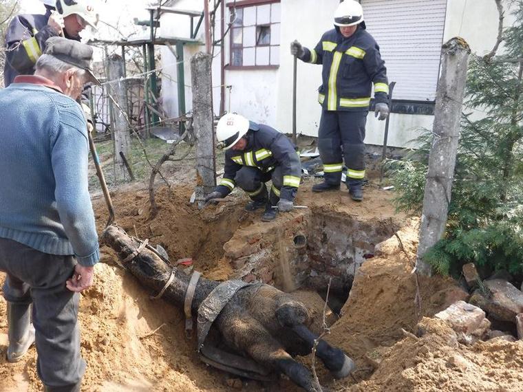 Az állat önerejéből nem volt képes kiszabadulni, s gazdái sem tudtak segíteni neki.A tűzoltók segítségét kérték