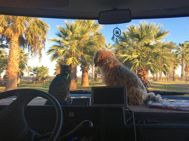 Állatok és elférnek a furgonban