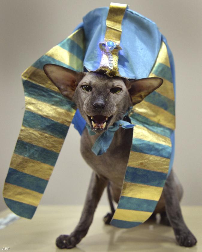 Ha eddig nem tudták, hogy mi hiányzik egy igazán tökéletes hétfő estéből, akkor most megmutatjuk Önöknek például, hogy néznek ki Kirgizisztán legszebb és legdíjnyertesebb macskái.Igen, macskái!Ő például egy szfinx ruhában pózoló Sziámi macska.